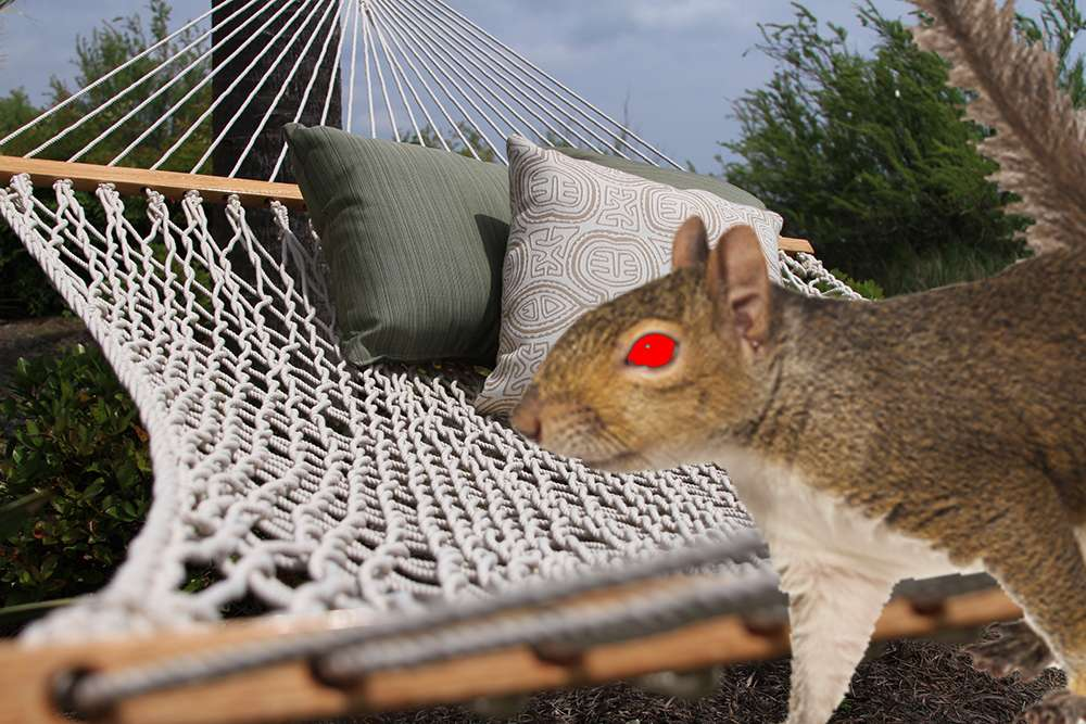 Squirrels-Chewing-Hammock