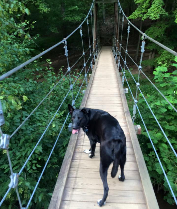 on the eno river suspension bridge with ralph